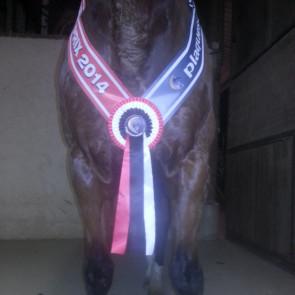 Collier cheval poney champion championnat concours equitation hippique race vache